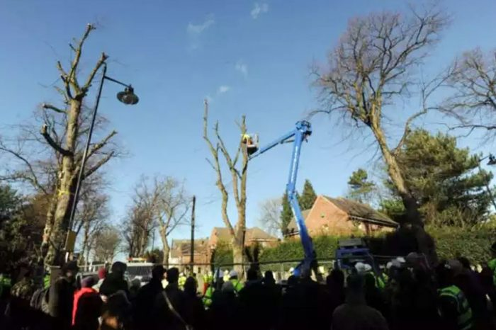 Sheffield Council forced to reveal target to remove 17,500 street trees under PFI deal
