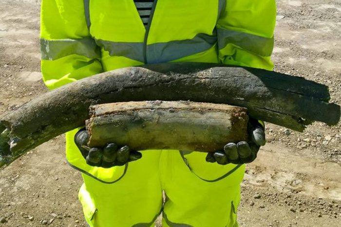A14 road workers uncover woolly mammoth and rhino remains