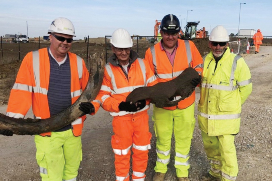 The team with the remains of a wooly mammoth, believed to be 150,000 years old. Credit: Highways England