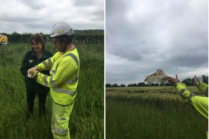 Owl rescue highlights environmental commitment on Britain's biggest roads project