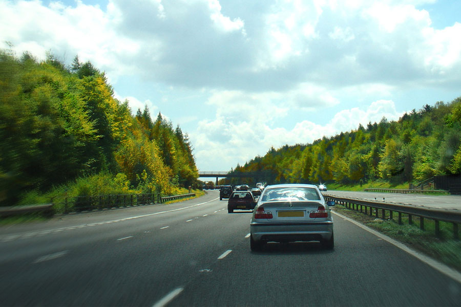 Will £26m M4 tunnel cause wildlife issues?