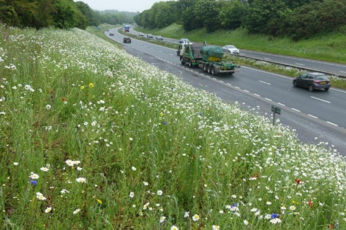 Flower power to help car journeys this bank holiday