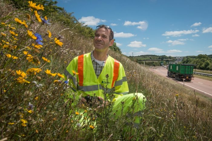 Highways England breaks new ground with eco drive to bring the country's verges to life