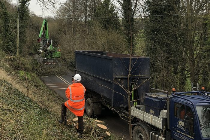 A345 ash dieback tree felling completed ahead of schedule