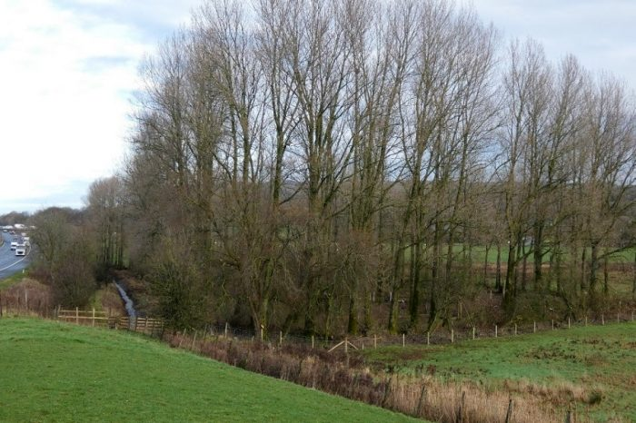 Wildlife haven from wood-for-the-trees M6 project