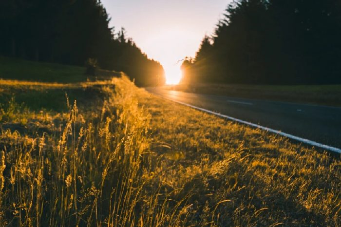 Study finds well managed road verges could benefit the environment