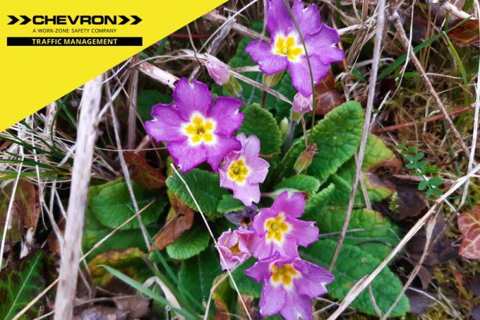 Chevron TM   Chevron TM to Create Nature Reserve to Promote Biodiversity
