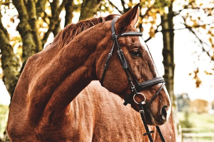 Horse rider road safety campaign launched in Oxfordshire