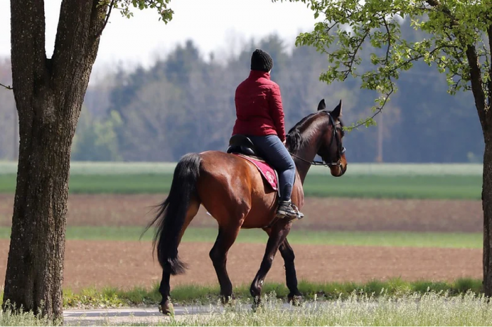 Calls for active travel schemes to consider horse riders